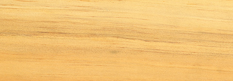 Sapwood Pine