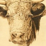 cow pattern animal fur textures pyrography basics