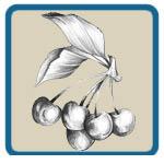 apple, pear, peach, and cherry patterns by Lora S Irish