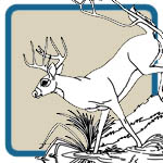Mule Deer and White Tail Deer Craft Patterns