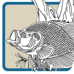Hook, Line, and Sinker Fishing Patterns