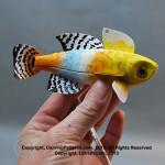 LSIrish-fish82-1665